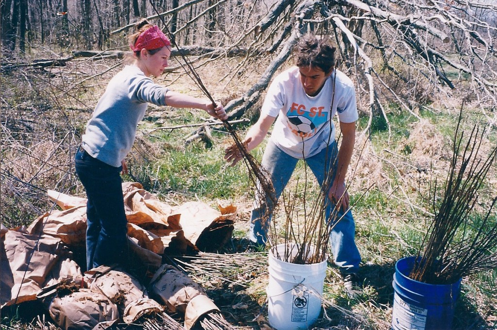 Spring 2000 - Loading the trees into buckets to put on the planter