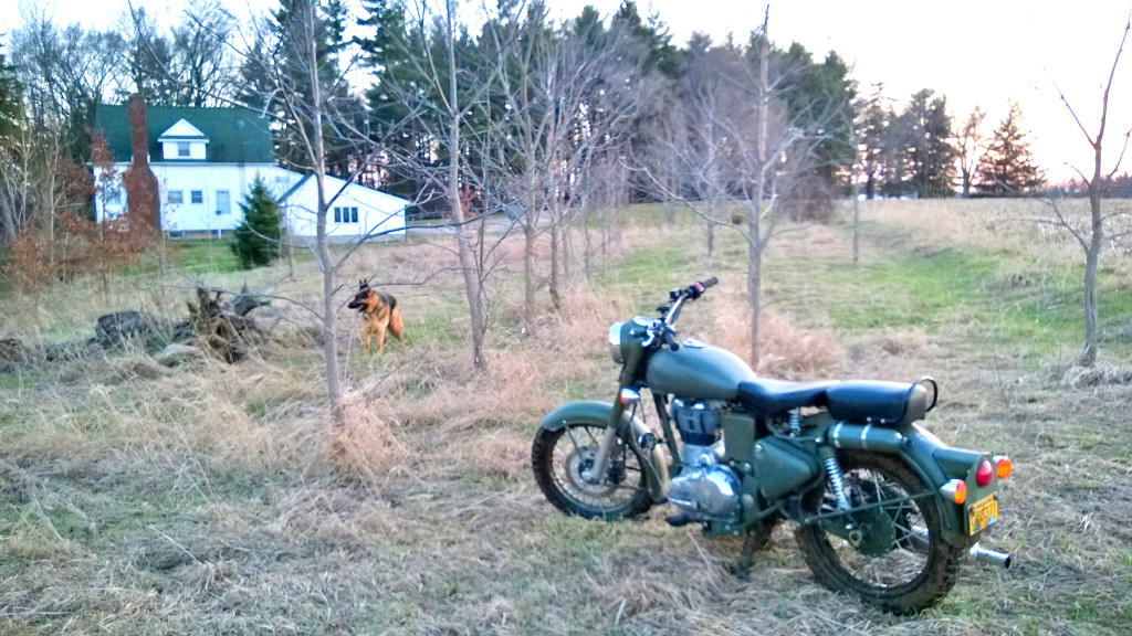 Spring 2014 - Some of the trees planted in a drier area - Motorbike for scale