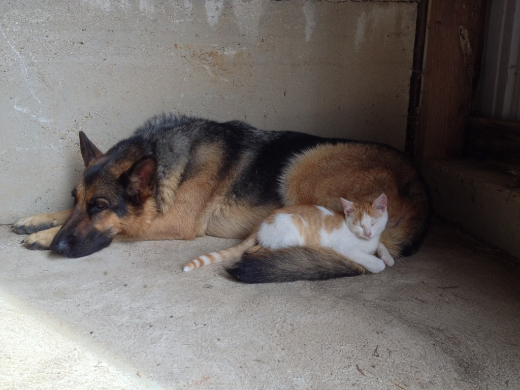 Ziggy and Krispie Treat cuddle while the humans clean out the back barn